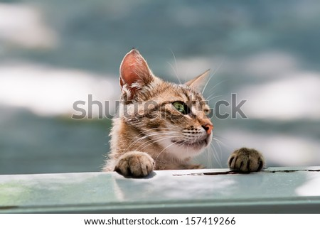 Hungry Cat Looking Into Window - stock photo