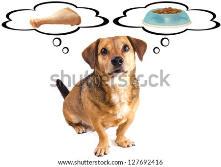 hungry dog and diet - stock photo