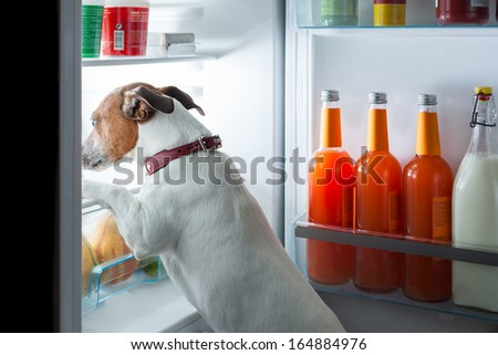 Funny Refrigerator Stock Images Royalty Free Images