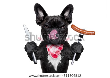 hungry french bulldog dog with tableware or utensils ready to eat dinner or lunch , with a sausage, tongue sticking out , isolated on white background - stock photo