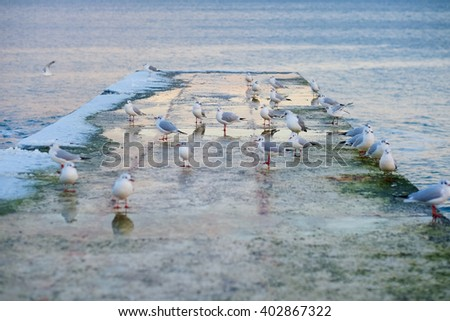 Hungry gulls circling over the winter beach in search of food on a background of sea and blue sky. Sea birds sitting on pier. - stock photo