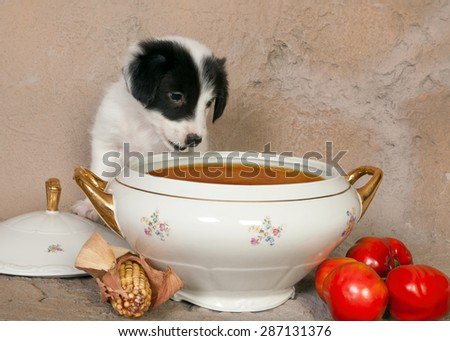 Hungry little border collie puppy in front of a soup tureen - stock photo