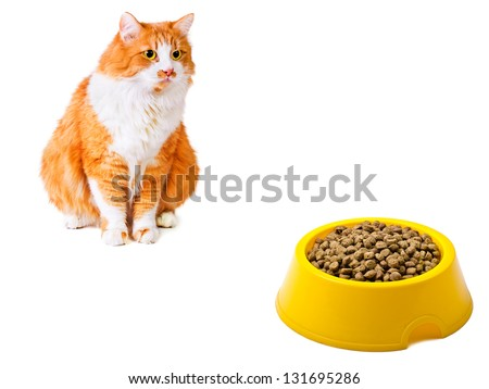 Hungry orange cat looks on the full yellow bowl isolated on white background