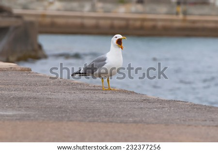 Hungry seagull - stock photo
