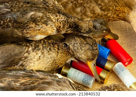 Hunting ammunition and ducks on the table - stock photo