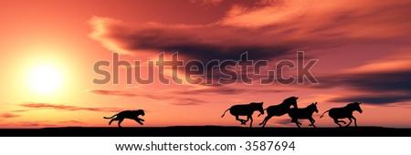 Hunting cougar - stock photo