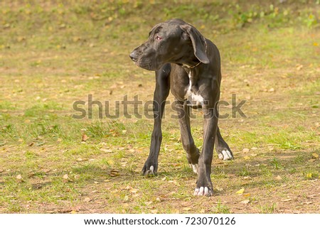 Hunting dog close-up