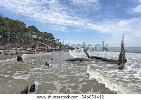 Hunting Island, South Carolina storm aftermath-erosion, downed trees and driftwood.