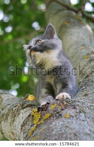 hunting little gray kitten on a tree - stock photo