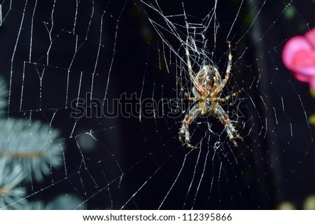 Hunting spider in its web - stock photo