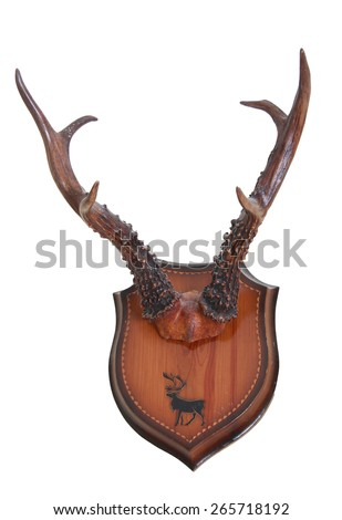 Hunting trophy. Antlers of a Siberian roe deer (Capreolus pygargus), mounted on a wooden plate isolated on white background - stock photo
