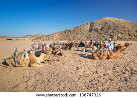 HURGHADA, EGYPT - APR 16: Unidentified bedouin people with camels resting on desert near Hurghada, April 16, 2013. Camel ride on the desert is one of the main local tourist attraction in Egypt. - stock photo