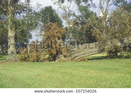 Hurricane Andrew damage, Jeanerette, LA area - National Disaster - stock photo