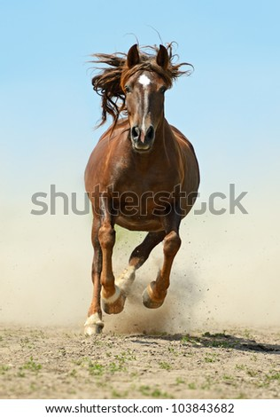 Hurrying Horse