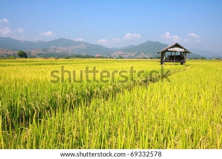 Hut and rice field in nature with blue sky - stock photo