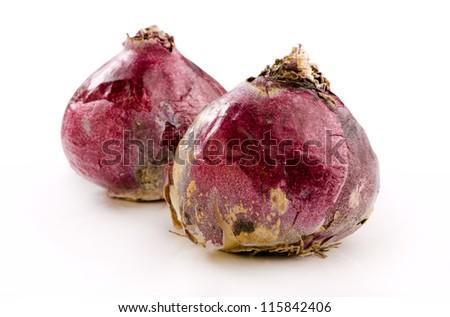 hyacinth bulbs - stock photo