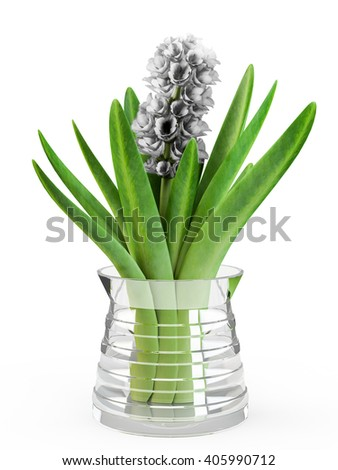 Hyacinth flower in glass vase isolated on white background. 3D Rendering, 3D Illustration. - stock photo