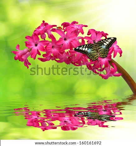 Hyacinth with butterfly on natural green background  - stock photo
