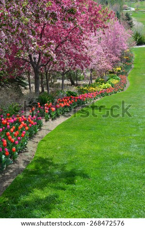 Hyacinths and tulips in bloom along cobblestone brick path. - stock photo