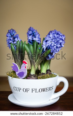 hyacinths in a pot - stock photo