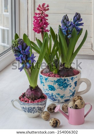 Hyacinths in vintage cups and decorative watering can on the window - stock photo