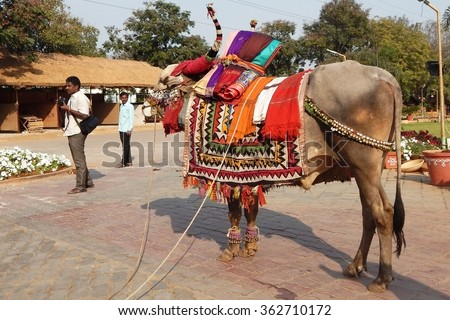 HYDERABAD,INDIA-JANUARY 14:Bull decorated in a traditional way during makar sankranti Indian Hindu festival celebration after harvest season on January 14,2016 in Hyderabad,India. - stock photo