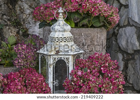 Hydrangea bushes and stylish lantern in a garden - stock photo