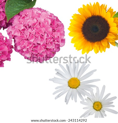 Hydrangea, Daisies and a Sunflower Isolated - stock photo