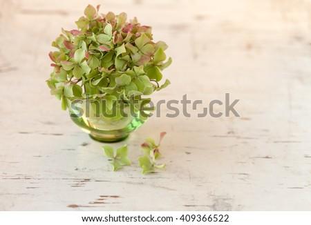 Hydrangea flower in green vase on rustic cream board - stock photo
