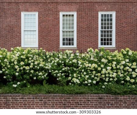 Hydrangeas below framed window and brick wall - stock photo