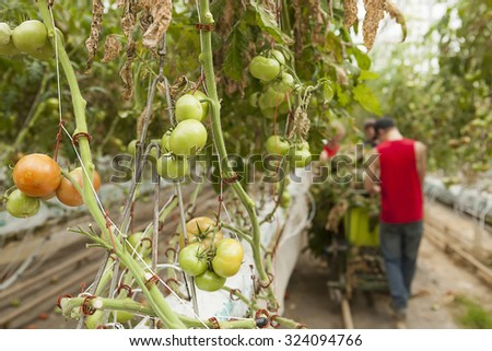 Hydroponic Greenhouse - stock photo