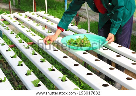 an analysis of hydroponics growing plants without soil The technique of growing plants without soil is called hydroponics it's simply  growing plants in water hydroponics is not only useful it can be fun clear a  place.