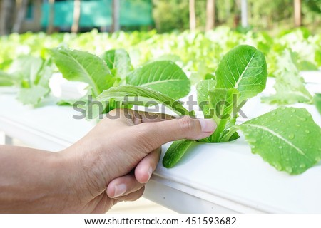 hydroponics method growing plants using mineral stock photo 451593682 shutterstock. Black Bedroom Furniture Sets. Home Design Ideas