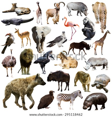 hyena and other African animals. Isolated on white - stock photo