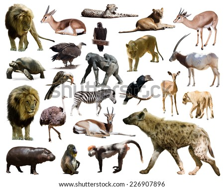 hyena and other African animals. Isolated on white background - stock photo