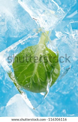 ice and leaf