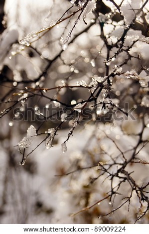Ice and snow covered branches of trees in the forest - stock photo