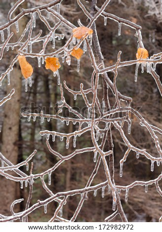 Ice coated tree branches after an ice storm. - stock photo