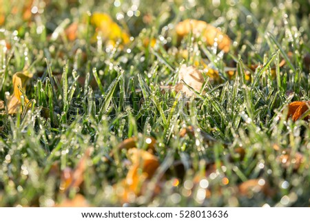 Ice coats green grass and fallen autumn leaves.