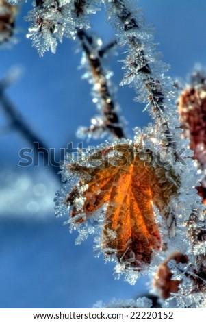 Ice Crystals on leaf - stock photo