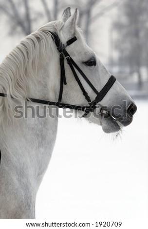 Ice horse - stock photo