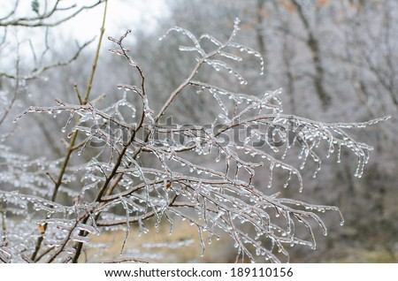 Ice storm on branches - stock photo
