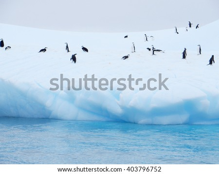 iceberg floating in antarctica with penguins - stock photo
