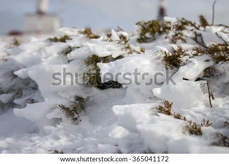 Iced bush at snowed mountain surface