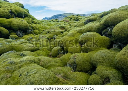 Iceland lava field covered with green moss from volcano eruption  - stock photo