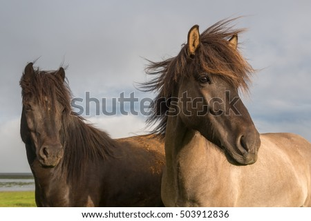 Icelandic horse with dramatic overcast sky