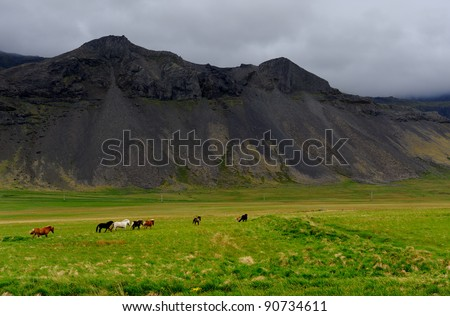 Icelandic horses roaming on Snaefellsnes in Iceland - stock photo