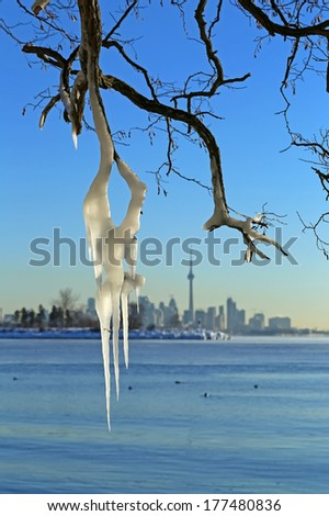 Icicles on the tree branches near lake Ontario.  - stock photo