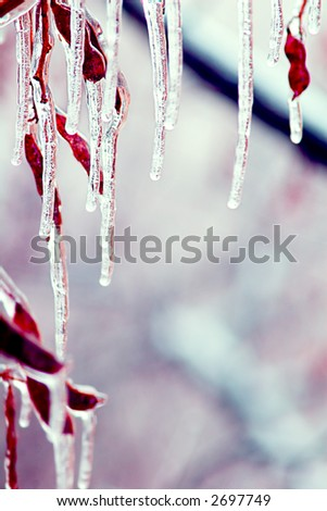 Icicles over branches with copyspace - stock photo