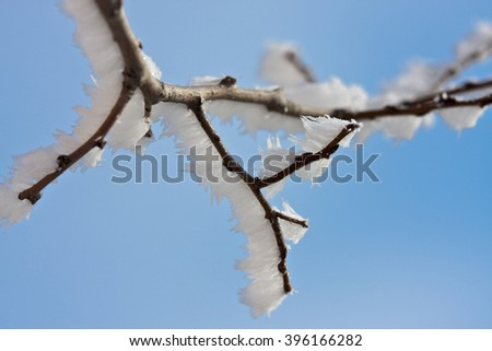 icy branches - stock photo